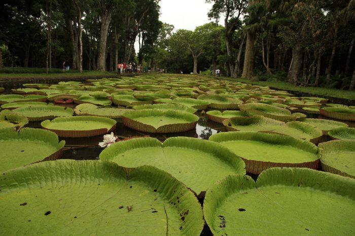 botanični vrt v Pamplemousses