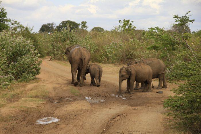 potovanja po Šrilanki