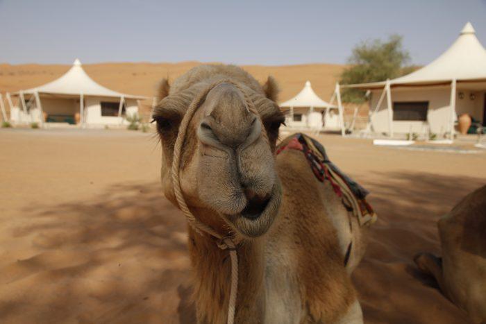 Night Desert Camp, Oman