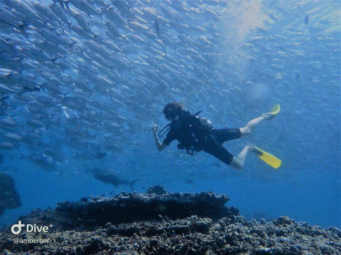 Sipadan, Borneo, potapljanje/snorklanje